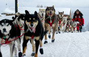The Great Race Iditarod